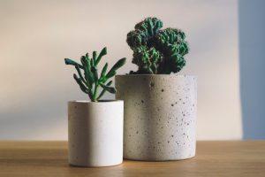 Biljke koje čiste vazduh