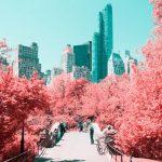 Čarobne fotografije Njujorka