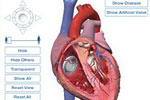 Ljudska anatomija
