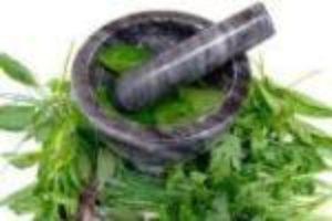 Začinske biljke u kuhinji