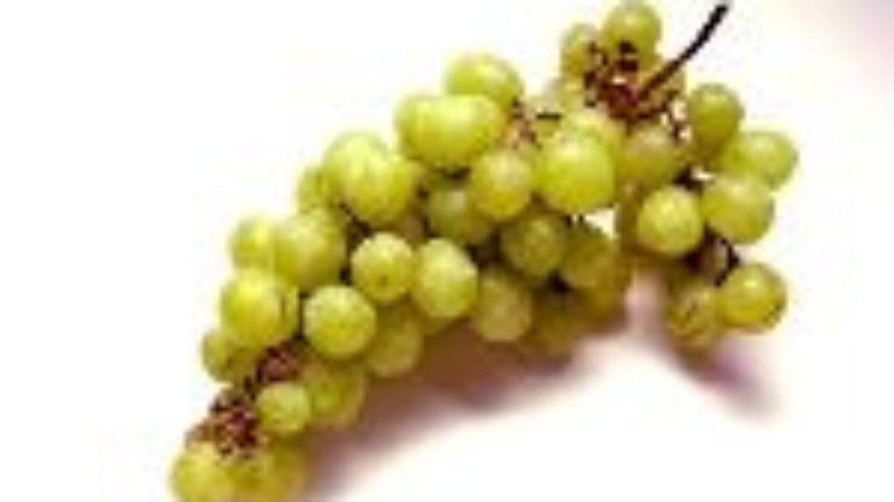 Italijanska vina regije Veneto
