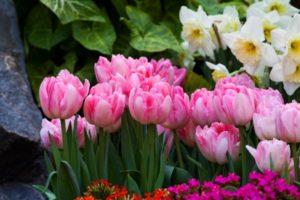 Jezik cveća