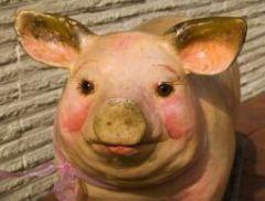 svinjski grip