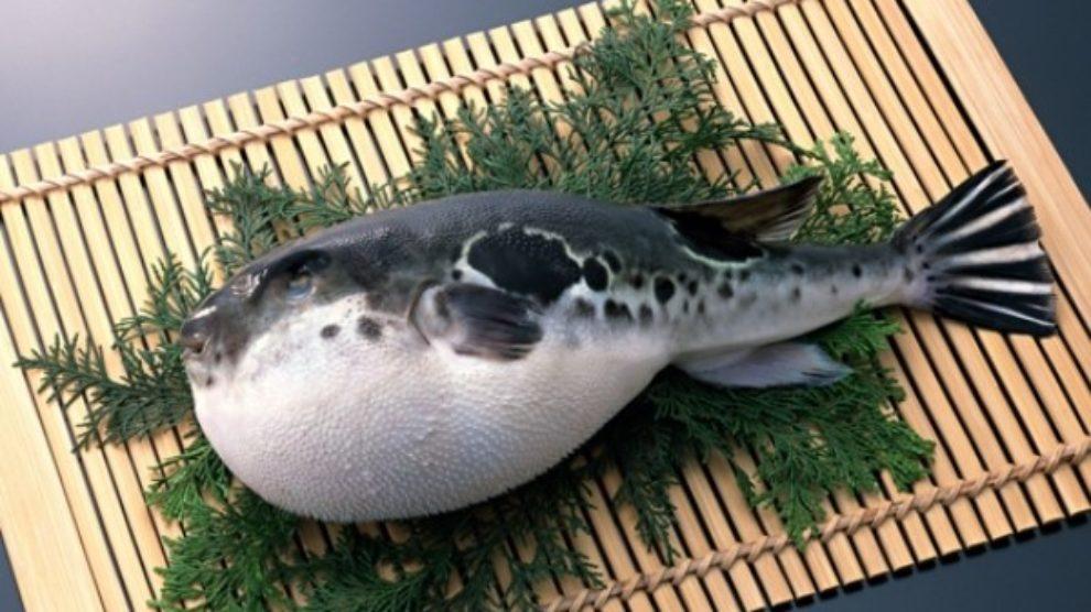 Neobična kuhinja – fugu riba