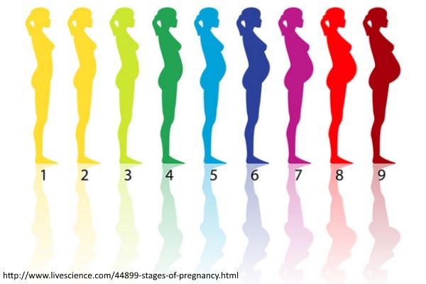 Fizičke promene tokom trudnoće