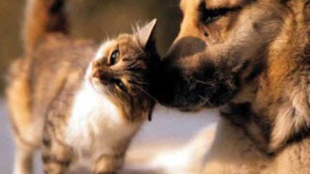 Kako ukloniti neprijatne mirise kućnih ljubimaca