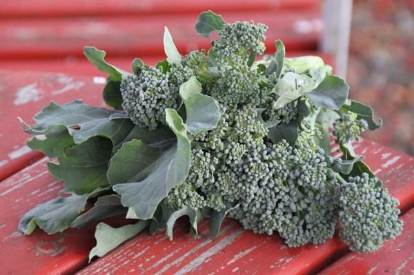 brokoli_v