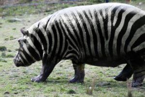 Foto manipulacije zivotinja