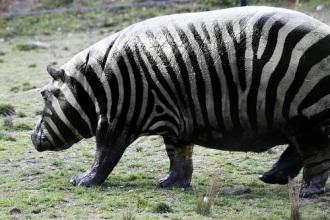 foto manipulacija zivotinja