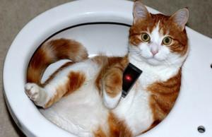 Kako koristimo mobilni u kupatilu?