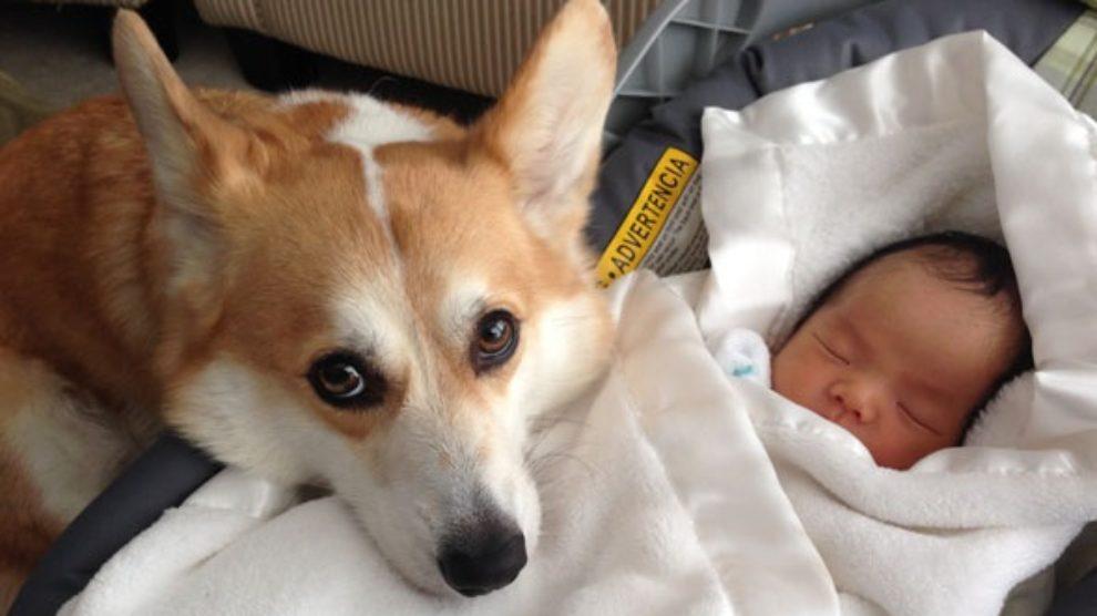 Pas i beba u istom stanu