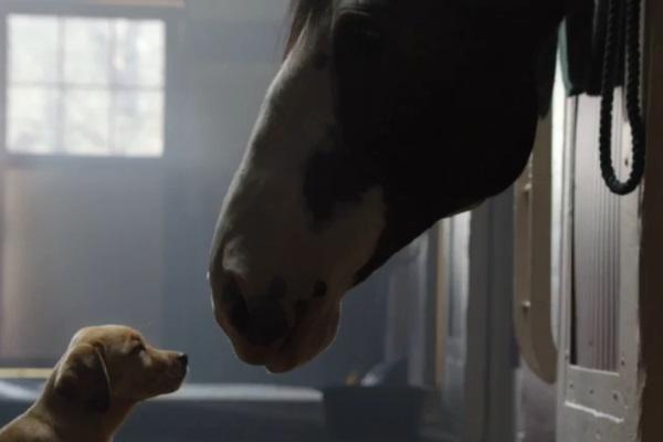 Najslađa Budweiser reklama
