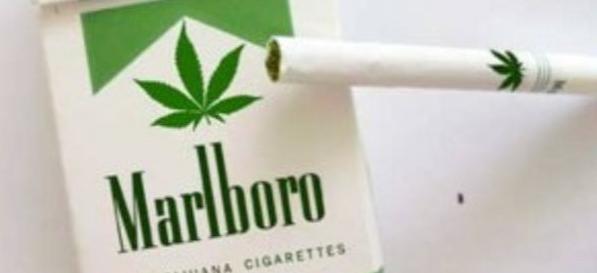 prve_cigarete_sa_marihuanom_v