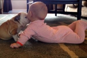 Neodoljivo: kučeća ljubav!