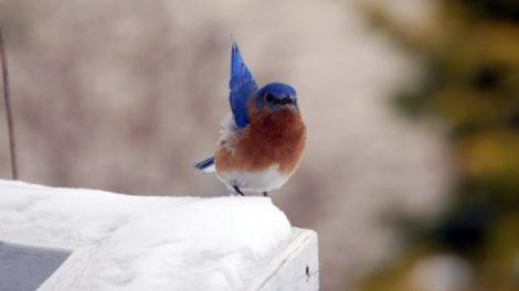 Poučna priča o promrzloj ptici