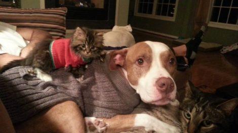 Ko kaže da se psi i mačke ne vole?