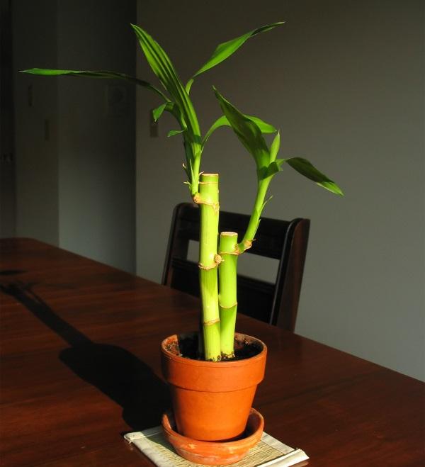 6_sobnih_biljaka_koje_prečišćavaju_vazduh_v