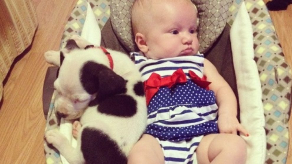 Beba i pit bul najbolji prijatelji!
