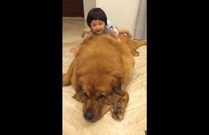 ovako_se_tibetanski_mastif_igra_sa_decom_m
