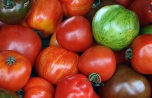 paradajz_koji_rađa_24_sata_dnevno_m