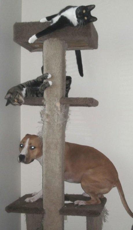 psi_koji_misle_da_su_mačke_v1