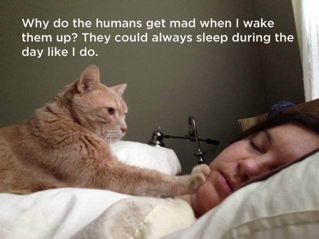 kako_mačke_razmišljaju_v2