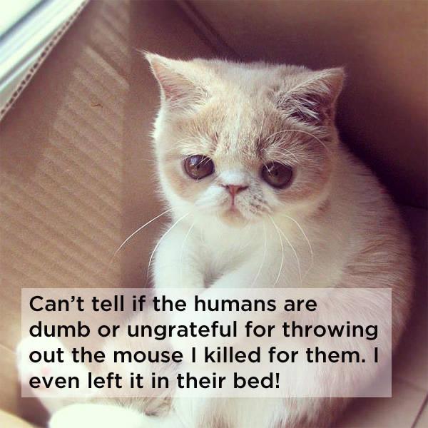 kako_mačke_razmišljaju_v3