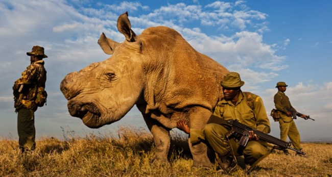 spasite_životinje_tvit_donacijama_v2