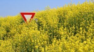 Da li je GMO bezbedna hrana?