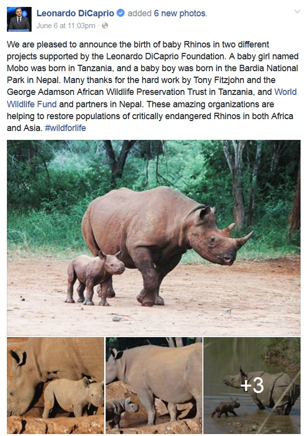 svet-bogatiji-za-dva-nova-nosoroga-v