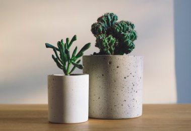 biljke-koje-ciste-vazduh-m
