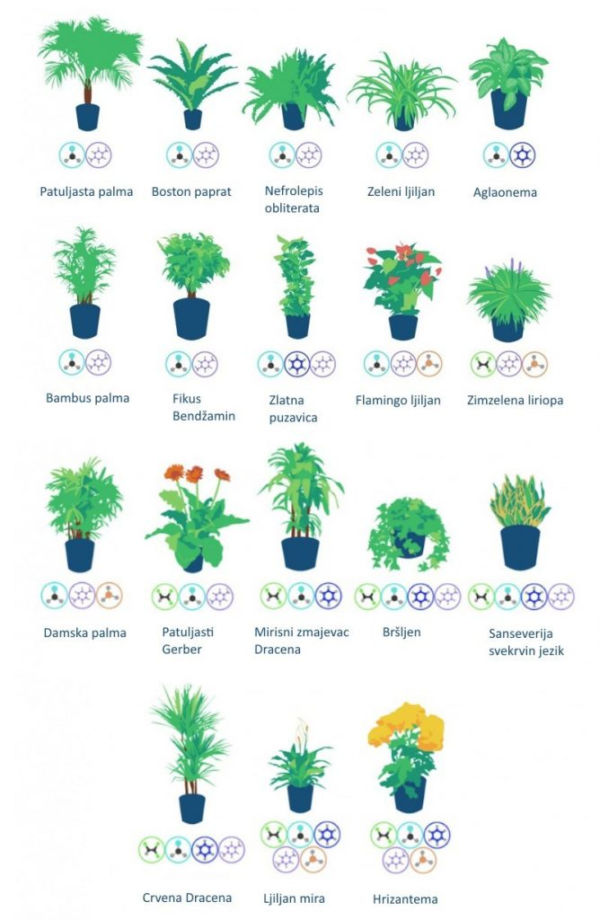 biljke-koje-ciste-vazduh-v