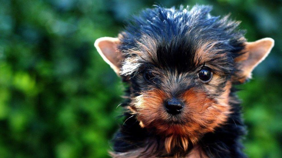 Top 5 rasa pasa za držanje u stanu