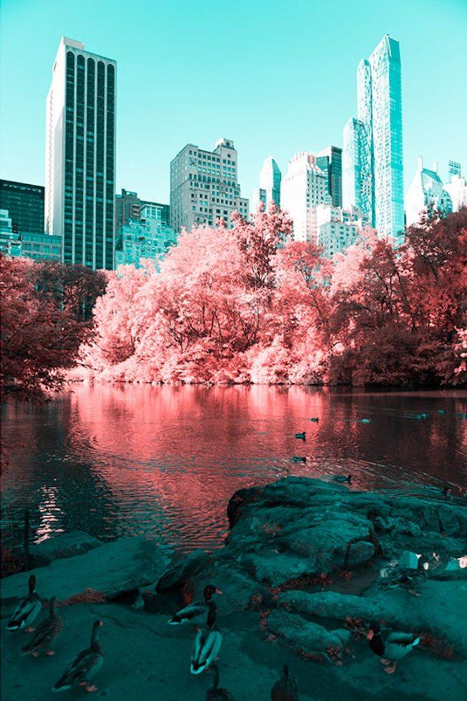 carobne-fotografije-njujorka-v2