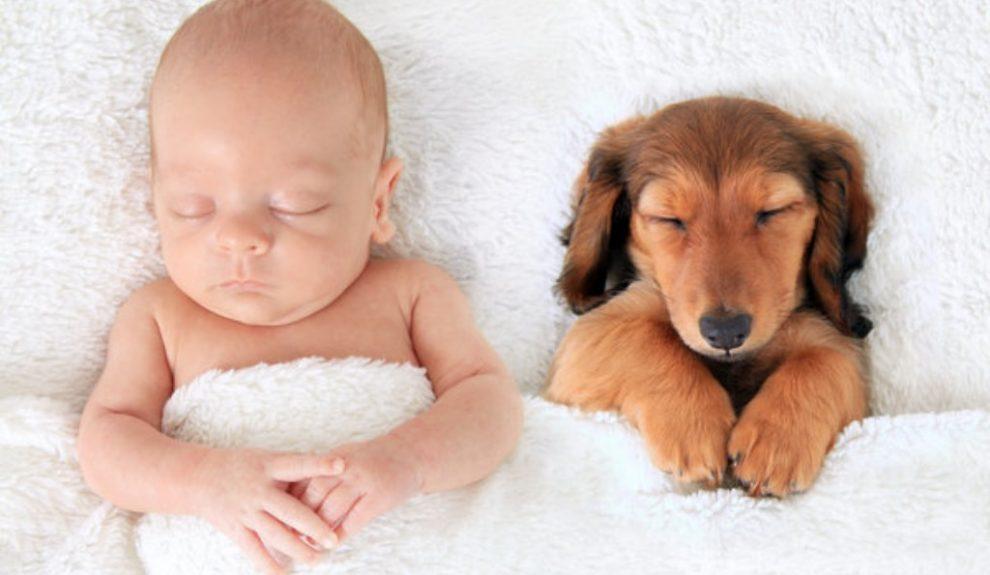 Deca i kućni ljubimci – ima li čega slađeg?