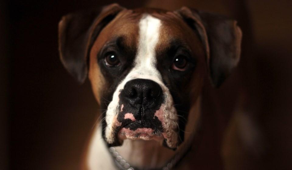 12 molbi jednog psa