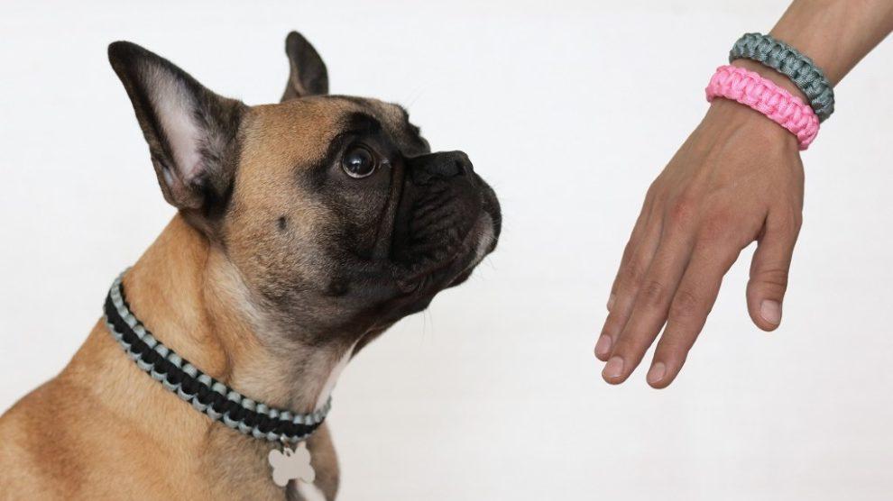 Personalizovane ogrlice za pse – još jedna crowdfunding kampanja iz Srbije