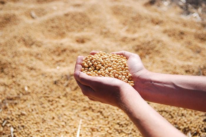 genetički-modifikovana-hrana-u-srbiji-4