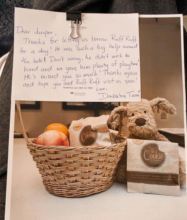 avanture izgubljenog psa i poruka hotela