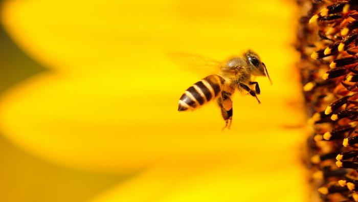 protiv bora uz pomoć otrova - pčelinji otrov