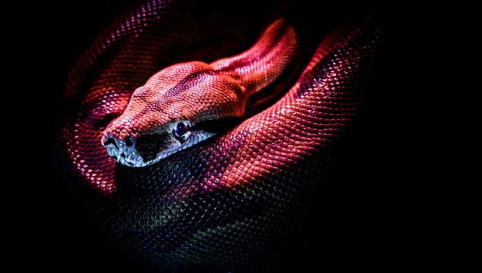 protiv bora uz pomoć otrova - zmijski otrov