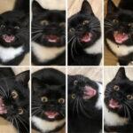 Slike koje možete da čujete: smešne mačke koje mjauču